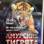 Всероссийские соревнования по плаванию среди мальчиков и девочек по плаванию Амурские тигрята
